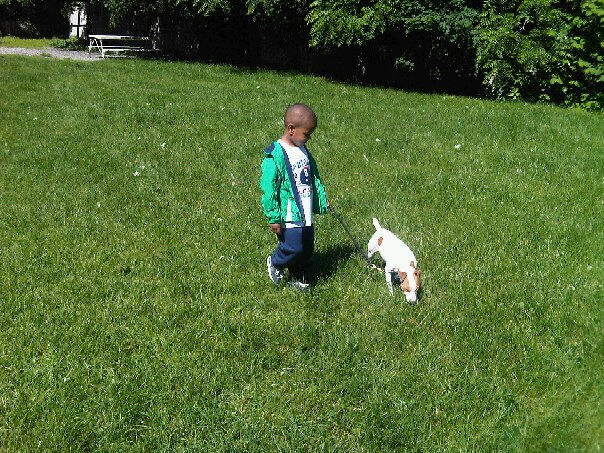 4 yr old doing basic obedience with a client's dog.