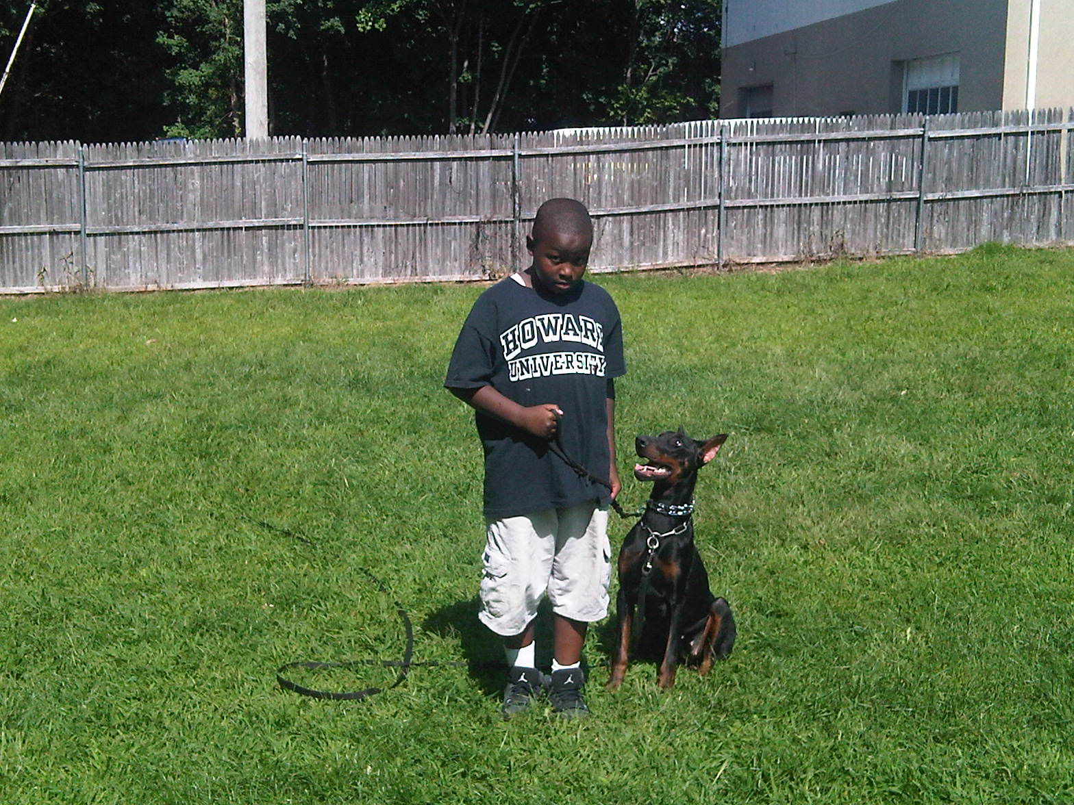 Devin working his 11 month old Doberman