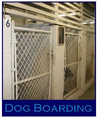 Title Shot Kennels Dog Boarding